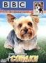 BBC: Собаки (2002)