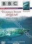 BBC: Большая белая акула (1999)